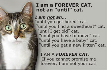 Dogs And Cats Forever Fl